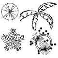 Arbustos em vista frontal e planta.